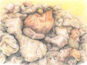 Vallejo Fire Pit Pastel